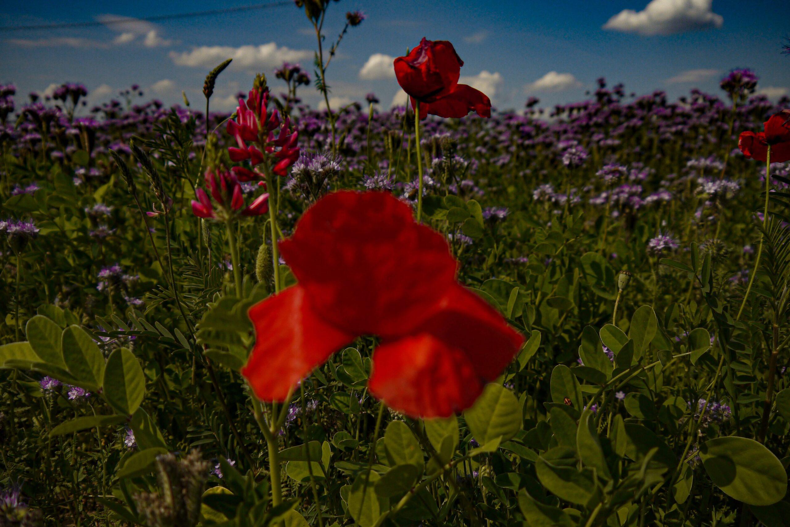 campi di fiori vicino a Modena